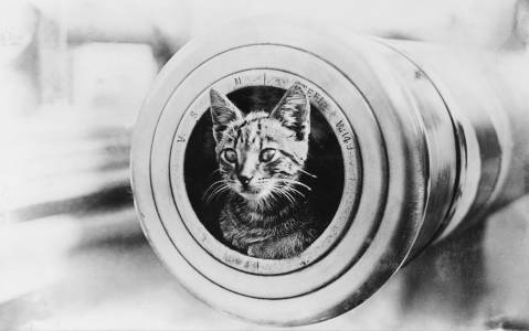 The feline mascot of the Australian light cruiser HMAS Encounter, peering from the muzzle of a 6 inch gun. circa. 1914