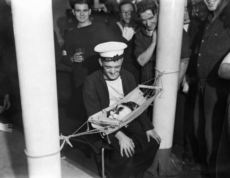 "The ship's good luck charm ""Convoy"", Hermione's ship's cat, sleeps in his own hammock whilst members of the crew look on"