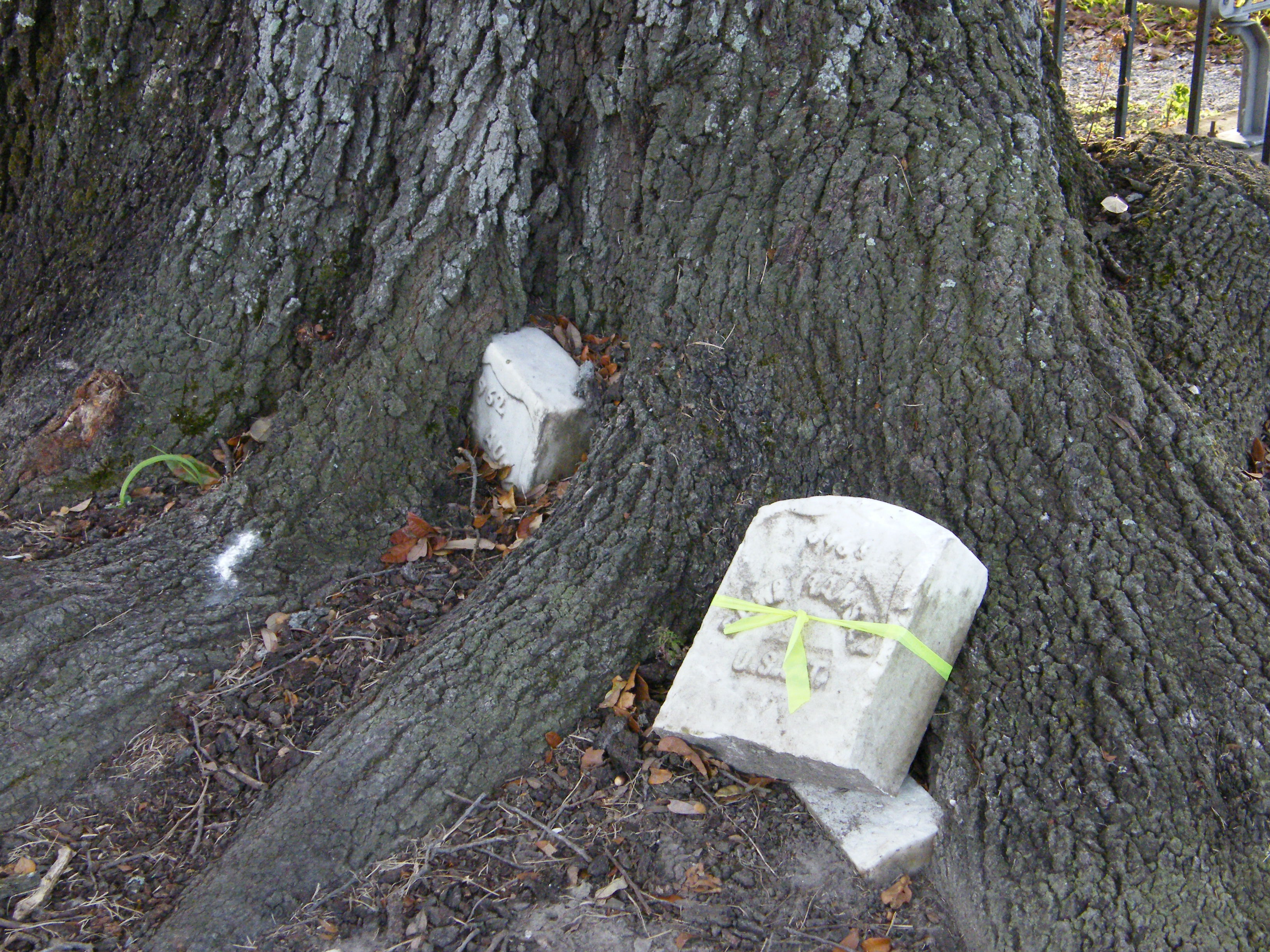 Sadly, many of the markers have been consumed by oaks over time and most are for soldiers unknown but to god.