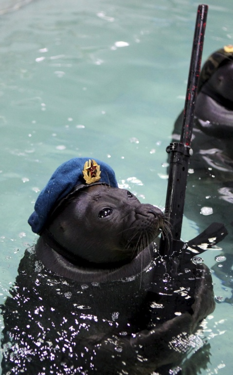 Seals dressed in military uniforms swim during a show marking the 70th anniversary of the end of World War Two, at an aquatic park in the Siberian city of Irkutsk, Russia, May 9, 2015. (Photo by Evgeny Kozyrev/Reuters)