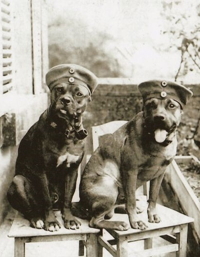 Those Germans love their dogs... another WWI era shot