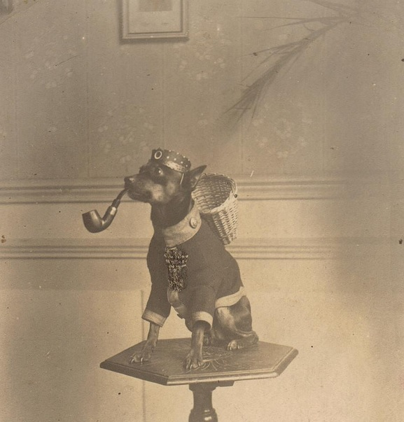 Gefreiter Hund A German WWI era mascot dog complete with his own jacket with rank button, feldmutze with cockade and his very own Iron Cross Second Class. Photo via Flickr https://www.flickr.com/photos/48140075@N04/6337681189/in/pool-971387@N24/