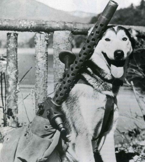 M1919 with sled dog Alaska WWII