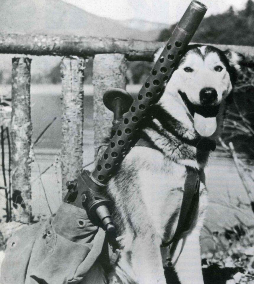 M1919 with sled dog Alaska WWII