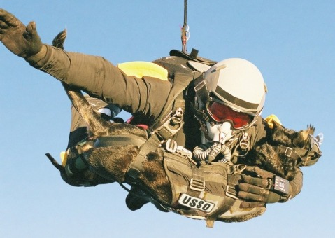 Mike Forsythe and his dog Cara break the world record for highest mandog parachute deployment by jumping from 30,100 feet