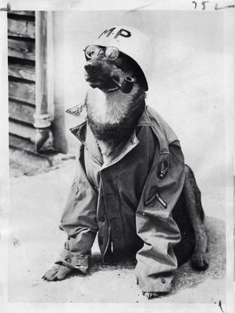 U.S. Scout dog, Luzon, 1945