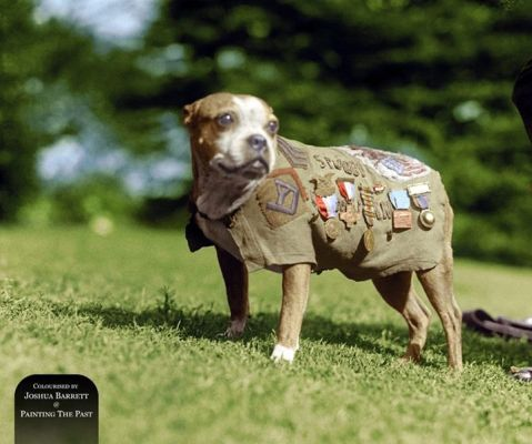 Sergeant Stubby, the mascot of the 102nd Infantry, 26th Yankee Division WWI