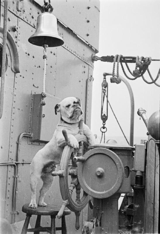A bulldog named Venus stands at the helm of the HMS Vansittart, a British Destroyer, c.1941