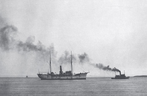 Albatross in poor state, 1920