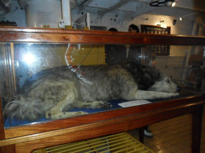 They even have the ship's mascot preserved