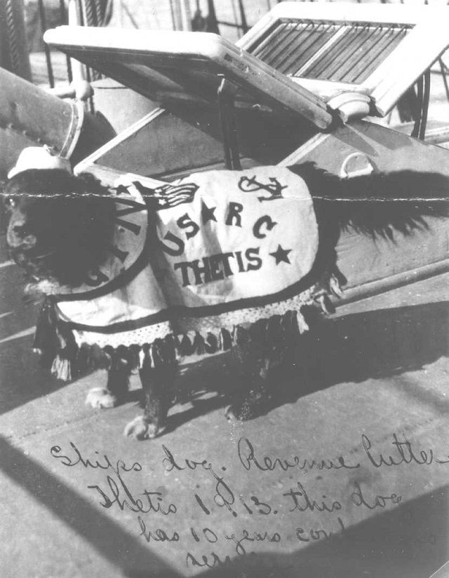 Mascot of the Revenue Cutter Thetis, somewhere up in Alaska in 1913. As the dog has 10 years of service marks, providing they aren't in dog years, it may be the one in the photo above.
