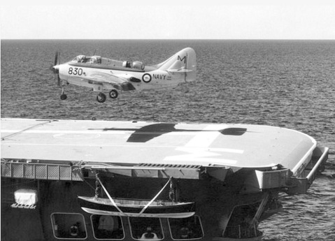 Gannet landing on Melbourne