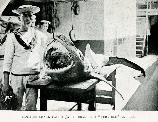 Shark caught by Terrible Angler at Durban