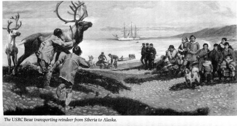 BEAR transporting reindeer from Siberia to Alaska