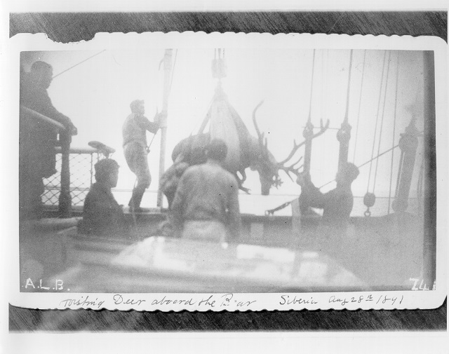 """Hoisting Deer aboard the Bear, Siberia, Aug 28th 1891.""; no photo number; photographer unknown. USCG Photo"
